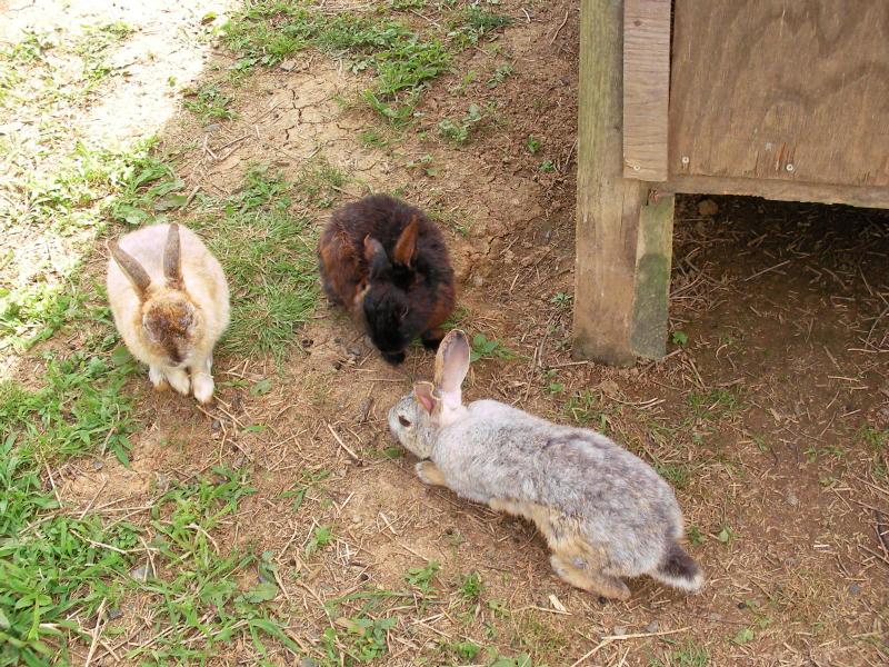 ダレたウサギ