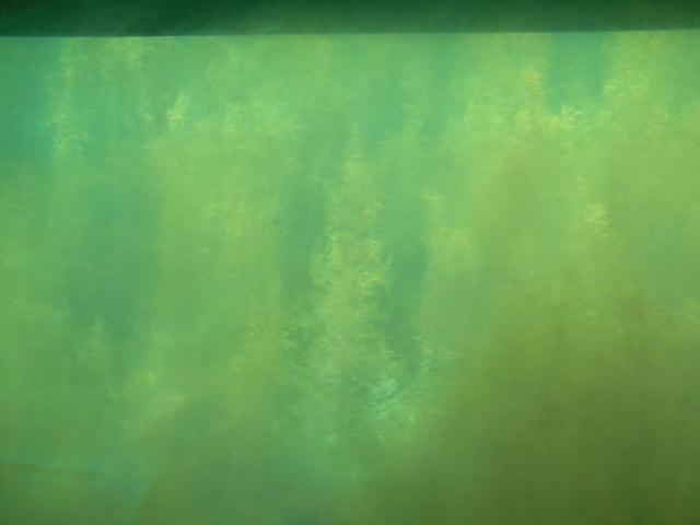 デジカメでは上手く映らない海藻